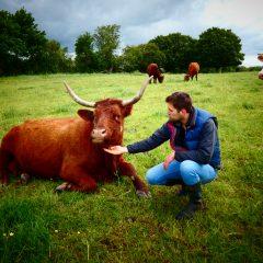 Lien vers Rencontre avec Paul Caby, quand le métier d'éleveur et de boucher riment avec simplicité